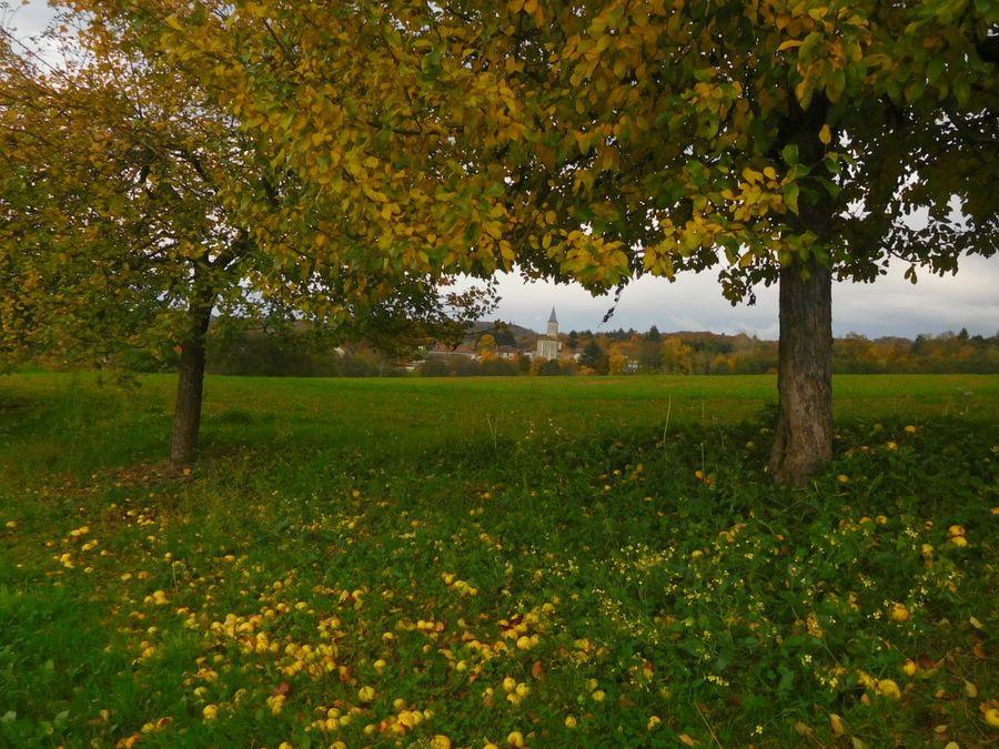 Aire camping-car à Firbeix (24450) - Photo 3
